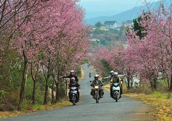 Từ Nha Trang đi Đà Lạt bằng phương tiện gì